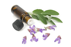 Sage flowers and essential oil bottle Stock Image