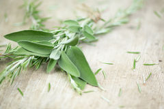 Sage. Fresh sage on wooden table Royalty Free Stock Images