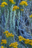 Sage and Goldenrod Background Stock Photo