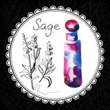 Sage. Health and Nature Collection. Aromatic sage oil (watercolor and graphic illustration Stock Image