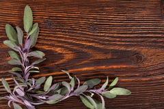 Sage herb background. Royalty Free Stock Photo