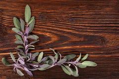 Sage herb. Royalty Free Stock Images