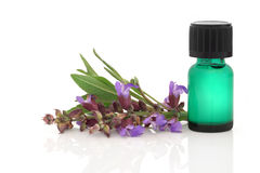 Sage Herb Essence Stock Image