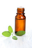 Sage herb leaves and an essential oil bottle Royalty Free Stock Photos