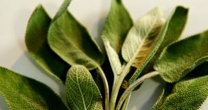 Sage herb in a tray 4k. Overhead of sage herb in a tray 4k stock video footage