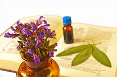 Sage with herbal tincture Stock Photo