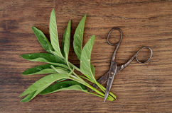 Sage, herbs and old rusty scissor on wooden background Royalty Free Stock Photography