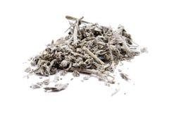 Sage. Herbs on white background Royalty Free Stock Photo