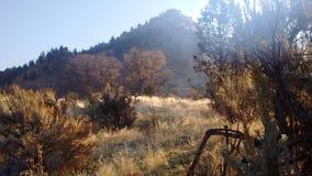 Sage and Juniper morning. Central Oregon high desert morning Royalty Free Stock Image