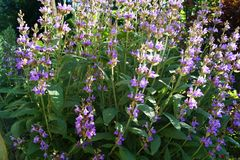 Sage Lavender Herbs en kruiden royalty-vrije stock foto