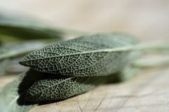 Sage leaf on cutting board. Fresh sage leaves on a cutting board in shallow depth of field Royalty Free Stock Photo
