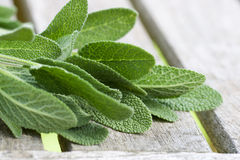 Sage leaves Stock Images