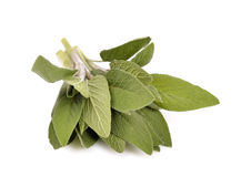 Sage leaves royalty free stock photo