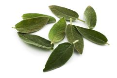 Sage leaves. Scattered sage leaves on white background stock photos
