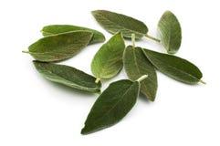Sage leaves Stock Photos