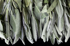 Sage leaves from above Royalty Free Stock Images