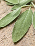 Sage Leaves On Chopping Board Stock Photos