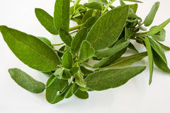 Sage leaves Royalty Free Stock Image