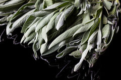 Sage leaves Stock Image