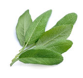 Sage leaves herbs Stock Photos