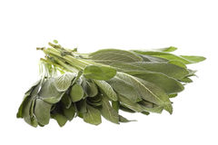 Sage Leaves Isolated Stock Photos