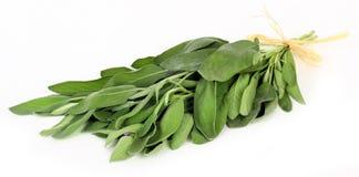 Sage leaves Stock Image