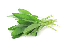 Sage leaves Royalty Free Stock Photography