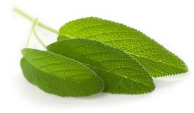 Sage leaves isolated on white Royalty Free Stock Photo