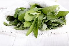 Sage leaves on white royalty free stock photo
