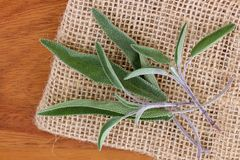 Sage leaves on a wooden background Stock Images