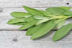 Sage leaves on a wooden background Royalty Free Stock Photo