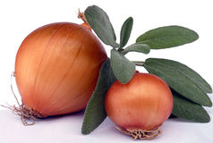 Sage and onion Stock Photography