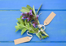 Sage and oregano. Fresh sage and oregano herbs with tags on blue wooden table. Country style royalty free stock image