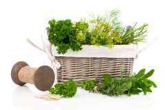 Sage, parsley and rosemary in wicker basket Stock Photos