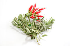 Sage peppers and rosemary Royalty Free Stock Photography