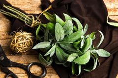 Sage plant brunch on a wooden table. Close up stock photo
