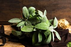 Sage plant brunch on a wooden table. Close up stock images
