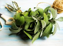 Sage plant brunch on a wooden table. Close up royalty free stock image