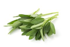 Sage plant isolated on a white background.  royalty free stock photo