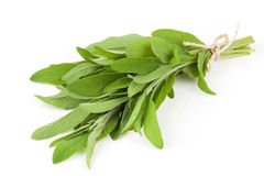 Sage plant. On a white background Royalty Free Stock Image