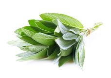 Sage plant on a white. Stock Images
