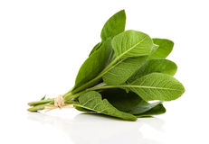Sage plant on a white Royalty Free Stock Image