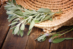 Sage plant on wooden table Stock Images