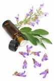 sage roślin odpowiedniej oleju obraz royalty free