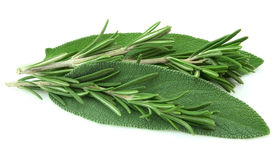 Sage and rosemary Royalty Free Stock Images