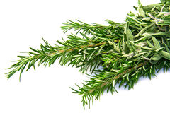 Sage and rosemary Stock Image