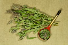 Sage, salvia. Dry herbs. Herbal medicine, phytotherapy medicinal. Sage, salvia. Dry herbs for use in alternative medicine, phytotherapy, spa, herbal cosmetics stock photo