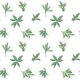 Sage seamless pattern Stock Photography