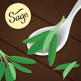 Sage on spoon Royalty Free Stock Photography