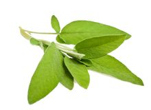 Sage sprig Royalty Free Stock Photos